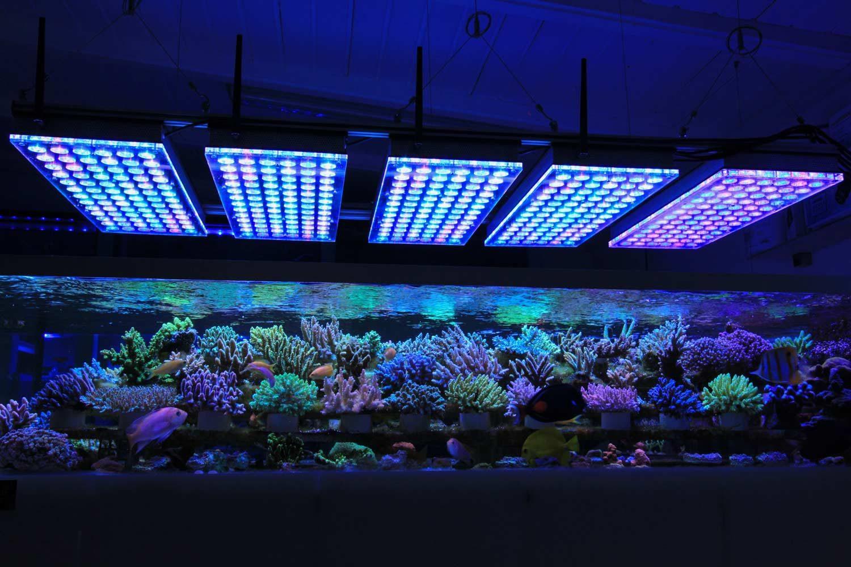 Come illuminare con i led il tuo acquario idealight blog