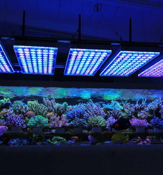 acquario-illuminato